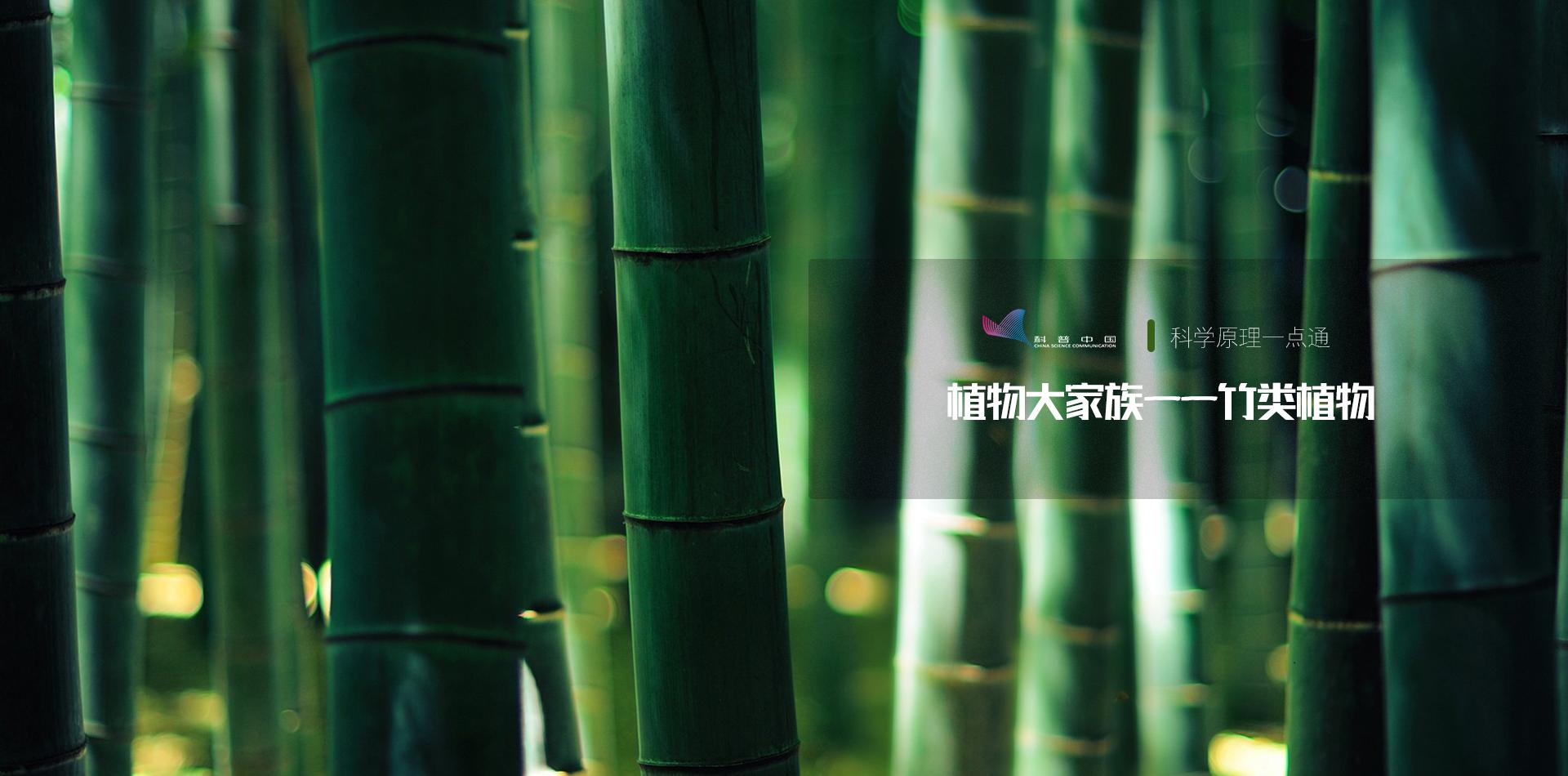 植物大家族——竹類植物