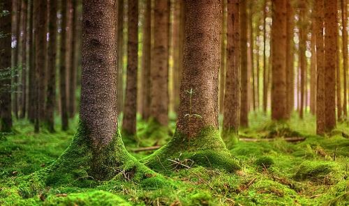 國際森林日:如果有一天你在森林中迷失