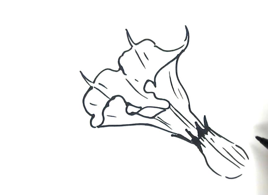 筆尖科學——曼陀羅花