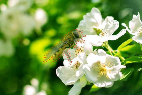 如果蜜蜂消失,人類將面臨多大的威脅?
