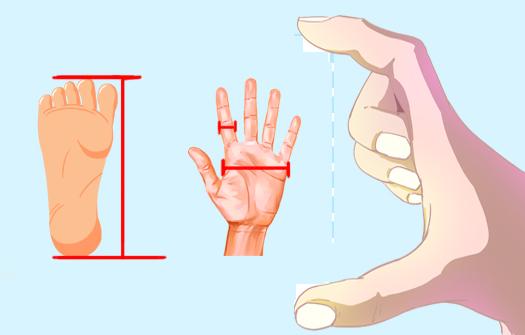 藍奇奇説科普——人體蘊藏的測量尺規