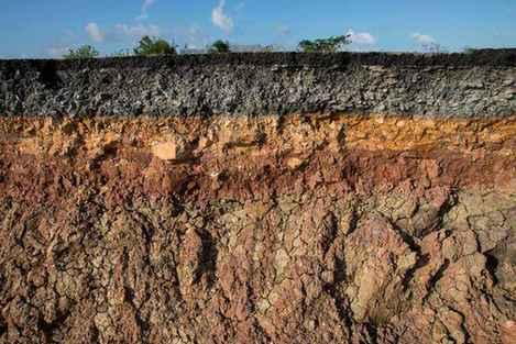 土壤的分層你了解嗎?