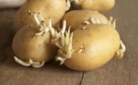 奇妙的食物——綠色的馬鈴薯